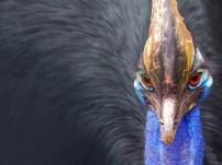 Free Download Birds Wallpaper Pack peacocks head