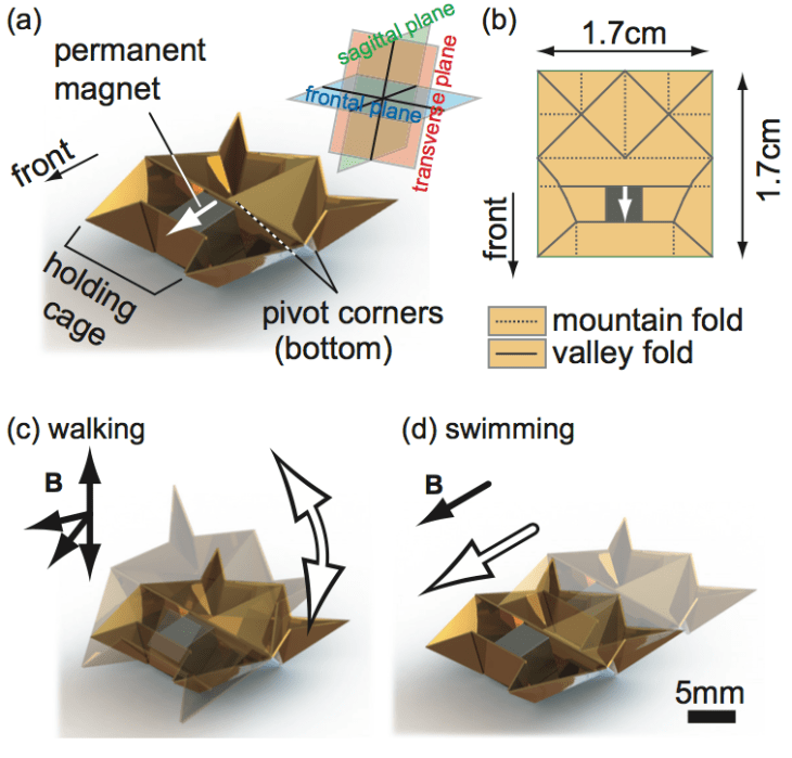The origami robot and the actuation methods. (a) Outlook of the system. (b) The crease pattern. (c) Walking mode by torque-based control. (d) Swimming mode by force-based control.