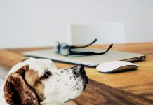 Technology changing the life of a pet dog