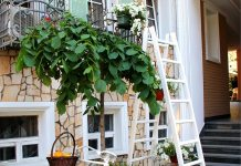best step ladder for home use