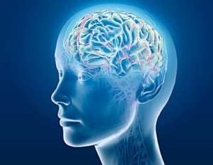 holographic device for brain