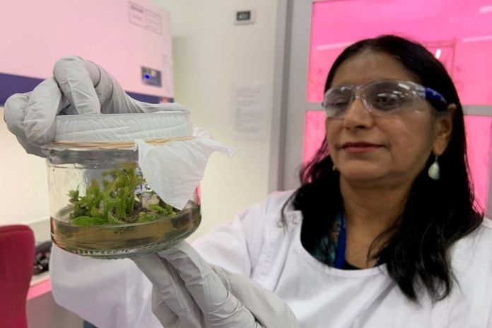 Researcher holds a container with avocado plants.