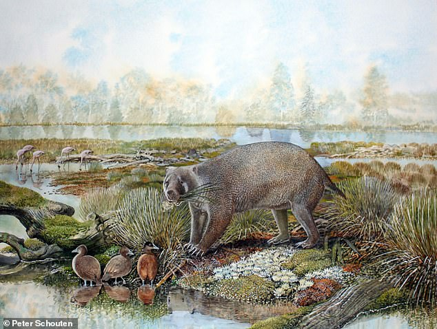 Life reconstruction of the giant wombat relative Mukupirna nambensis on the shores of Lake Pinpa 25 million years ago. Also shown are stiff-tailed ducks (foreground) and flamingos (background), the remains of which are known from the same fossil deposit