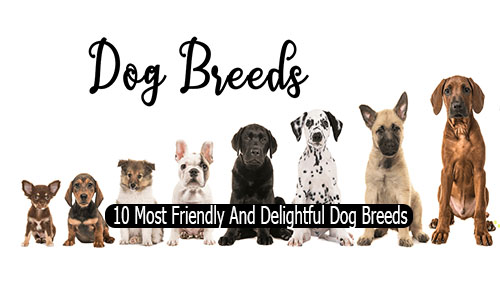 10 Most Friendly And Delightful Dog Breeds - Friendly Dog Breeds