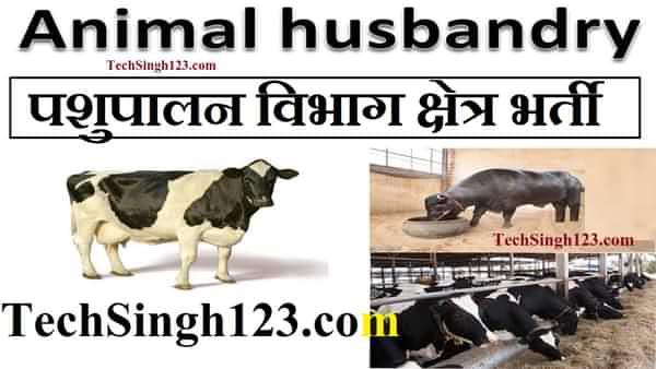Animal Husbandry Recruitment पशुपालन विभाग भर्ती