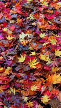 Fall Time - Retina HD Wallpaper Collection