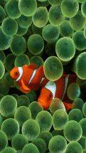 Fish iPhone - Retina HD Original Wallpapers