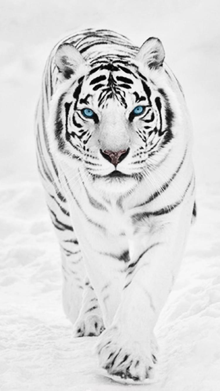 Обои На Айфон 6 Тигр