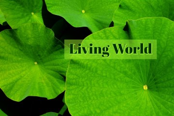 NEET Coaching : Biology- Living World