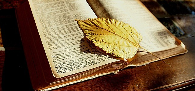 Translation Of The Bible And Evolution Of The English Language