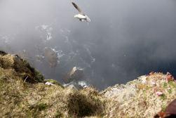 Cliffs of Foula - Shetland