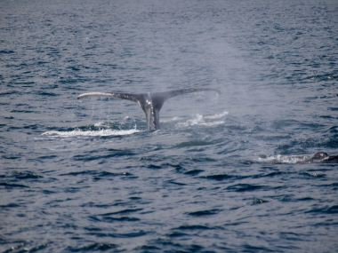 Whale watching from the Tecla
