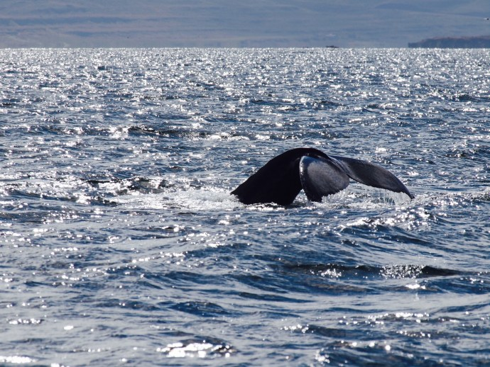 Whales spotted from the Tecla