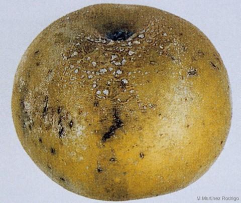 Carencia de Boro en Manzano
