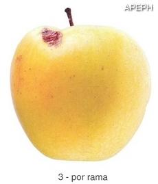 Russeting por rama en Manzana