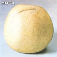 Frutos con lesiones no cicatrizadas Manzana