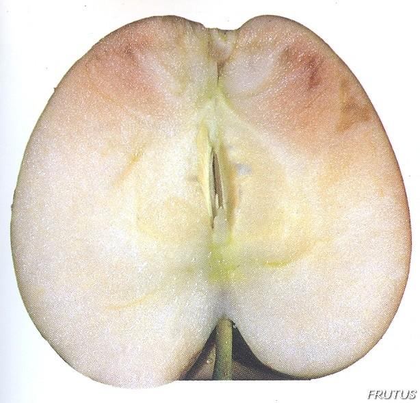 Corazon Vidrioso Manzanas Peras