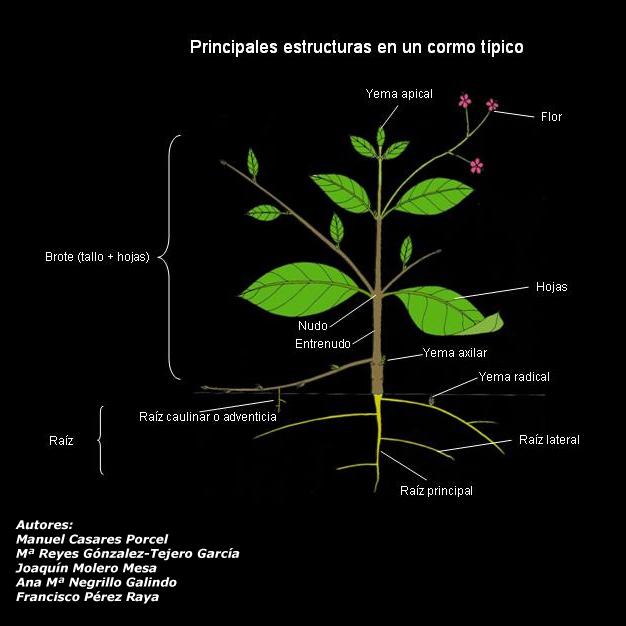 Partes De La Planta Wwwtecnicoagricolaes