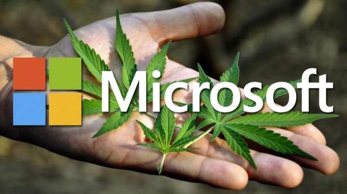 Microsoft Maconha