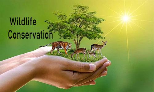 Wildlife Conservation - Wildlife Conservation Society   Jobs in Wildlife Conservation