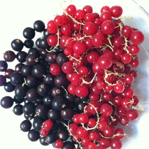currants-cape-town Home