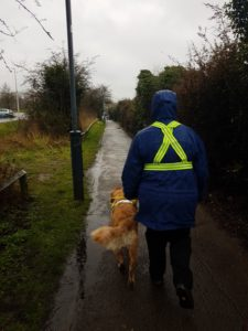 Teddy and Ma striding out ahead of Jenna and Pa. Ma is wearing a blue waterproof coat with hood up and hi-viz yellow body straps. Walking along a twitten with grass and hedges either side.