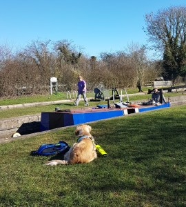 Teddy lying on the grass in a 'Down Stay' watching blue tugboat Kinver going down in the lock