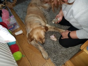 Teddy lying on rug with Ma kneeling beside him trying to scrub mud off his front leg using doggywipes