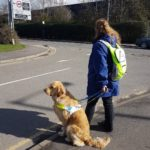 Teddy in harness sitting at a kerb with Ma positioned ready to cross the road. Ma is listening for oncoming traffic before giving the 'Forward' command