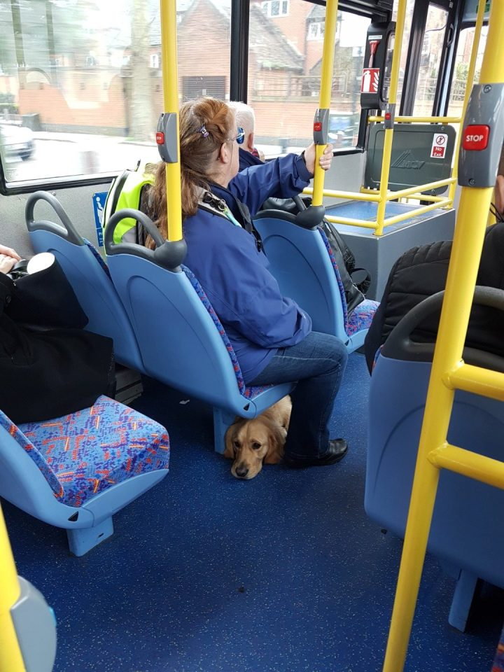 Teddy lying on the floor of a London bus looking backwards under the seat that Mummy is sitting on