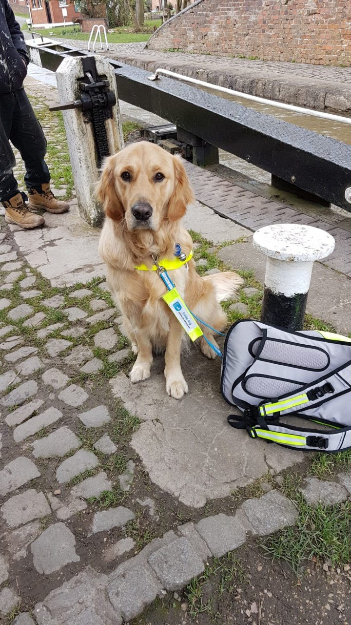 Teddy in a sit by a white-topped bollard at the lockside. Mummy's hi viz yellow backpack is lying by the bollard and the lock gate and mechanism is in the background