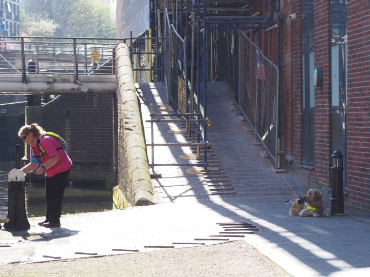 Teddy lying on red-bricked surface, with his lead looped over a bollard beside a building. This is at the side of a lock in Birmingham - one of the 13 locks in the Farmer's Bridge Flight leading up into the city. There is scaffolding over and beside the towpath above, which goes up a steep slope beside the lock.