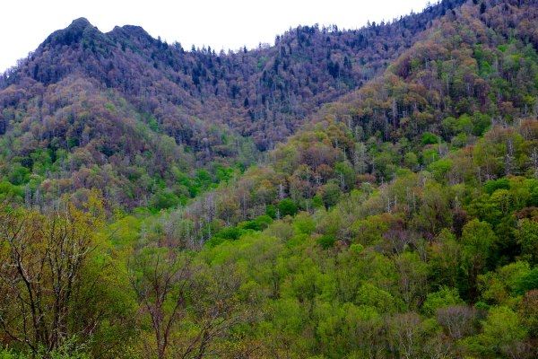 Chimney Tops from Highway 441/Newfound Gap Rd