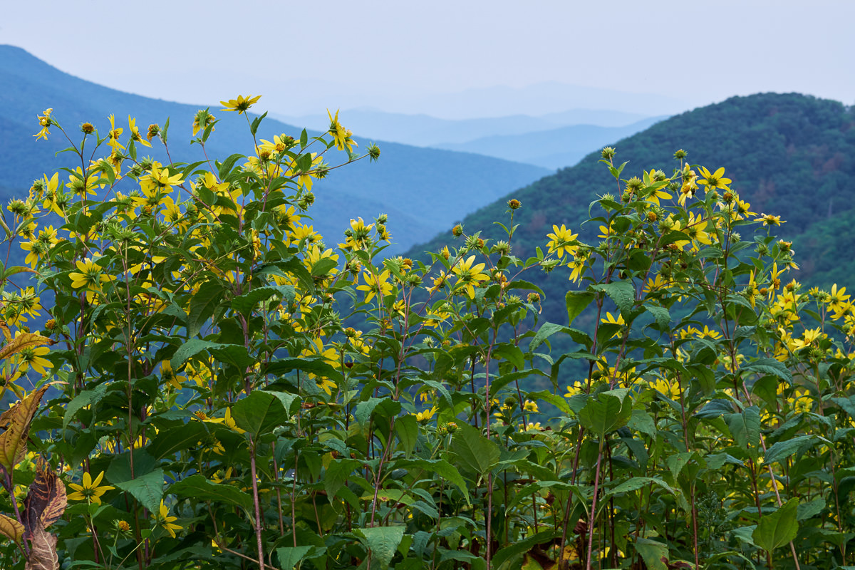 Bald Knob Overlook, Blue Ridge Parkway