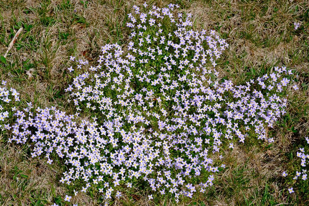Blue Ridge Parkway Flowers
