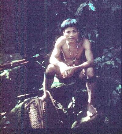 nativo punan
