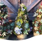 Succulent Christmas Wreath Archives Ted Lare Design Build