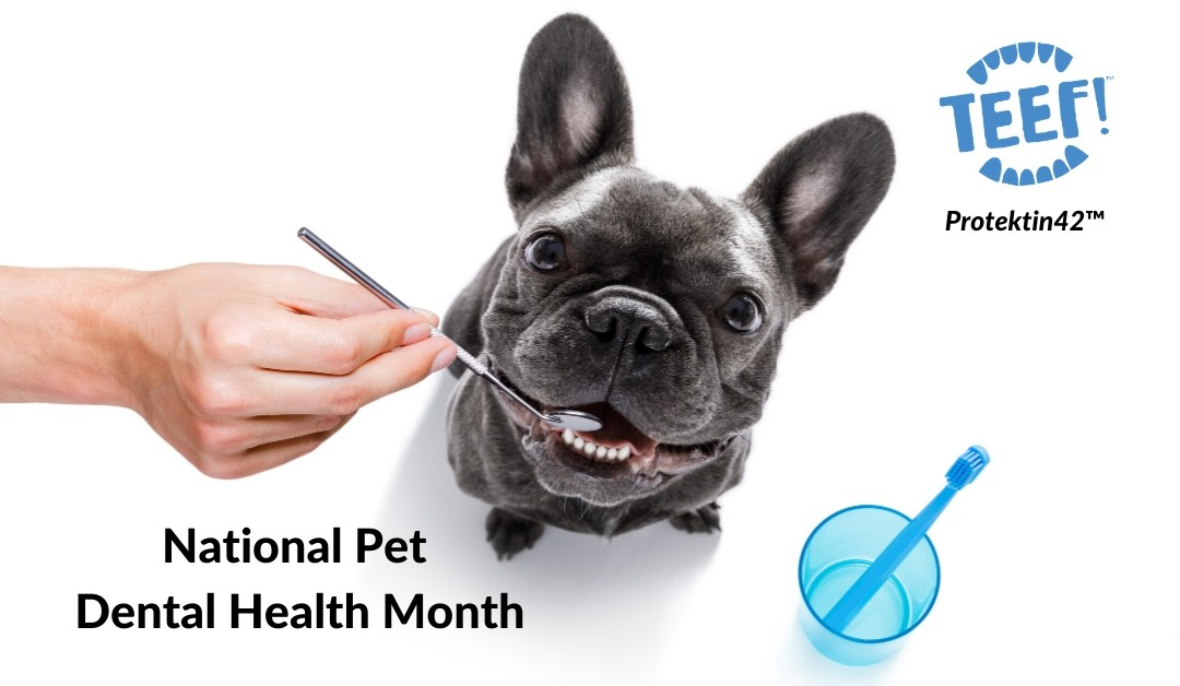 National Pet Dental Health Month – Tips & Tricks