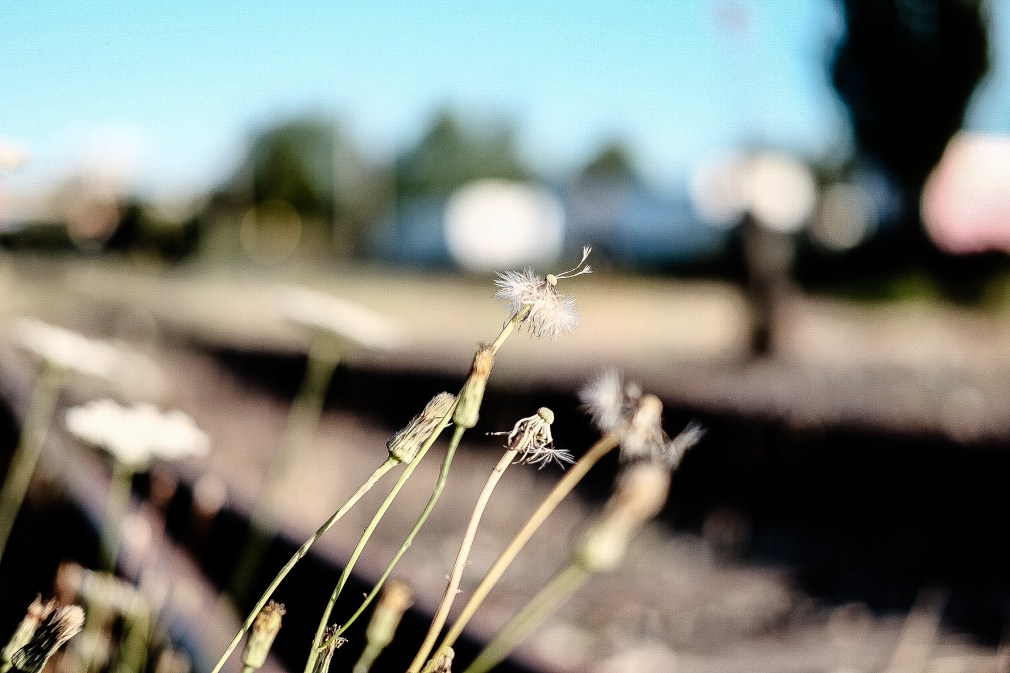 train tracks, weeds, New Westminster, BC, Canada, quay, riverside