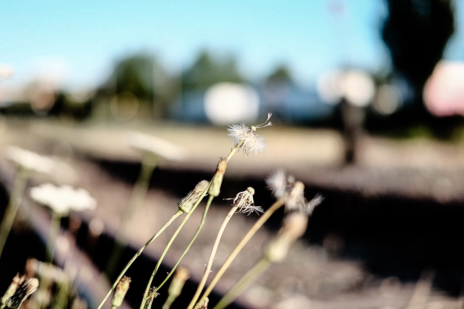train tracks, weeds, New Westminster, BC, Canada, quay, riverside