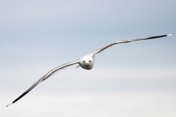 bird_620