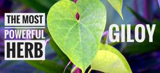 The Benefits of Magical Herb- Giloy