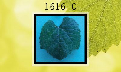 1616 C