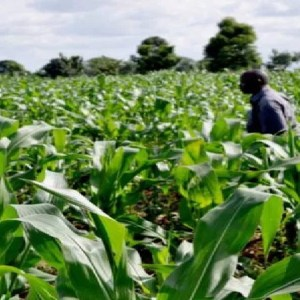 Ways to Commercialize Agriculture Venture Ideas in Nigeria, Africa