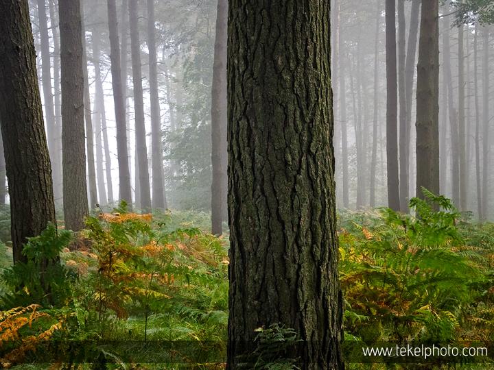 Morning forest, Peak District UK 2015