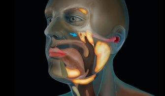Bilim insanları, kafatasında yeni bir organ bulduklarını açıkladı.