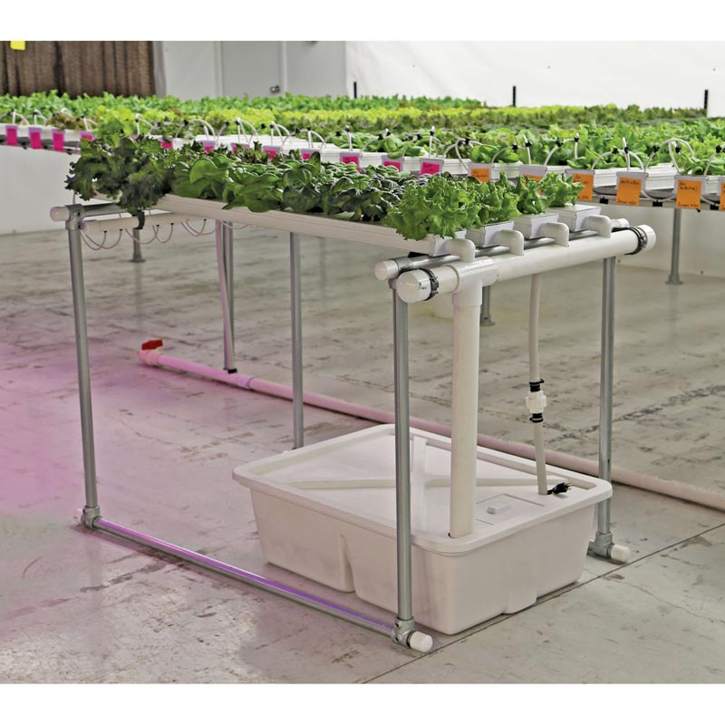 HydroCycle Hobby NFT Lettuce System 6W Channels TekSupply