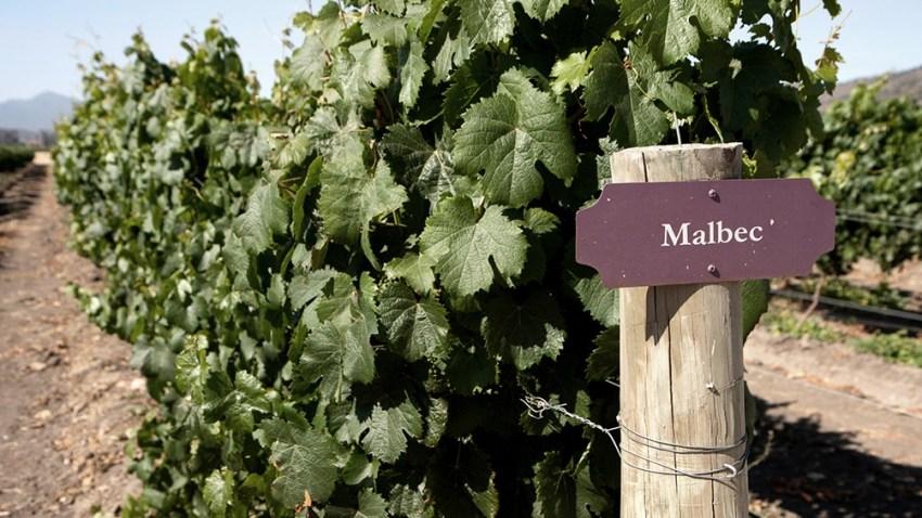 La superficie plantada con Malbec en la Argentina varió a lo largo de los años.