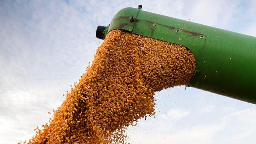 """""""El mercado de maíz se muestra como el más dinámico"""" destacó la Bolsa de Comercio de Rosario."""