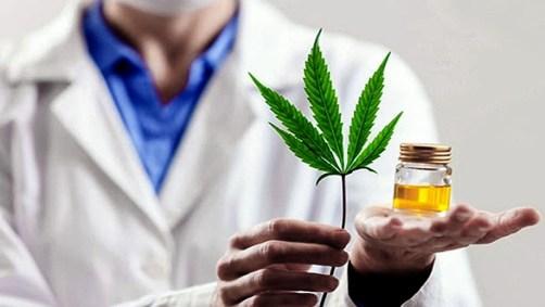 El INTI analiza la elaboración de derivados médicos con cannabis